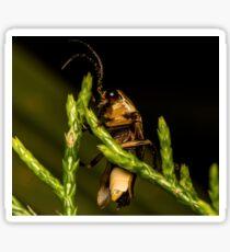 Firefly (2) Sticker