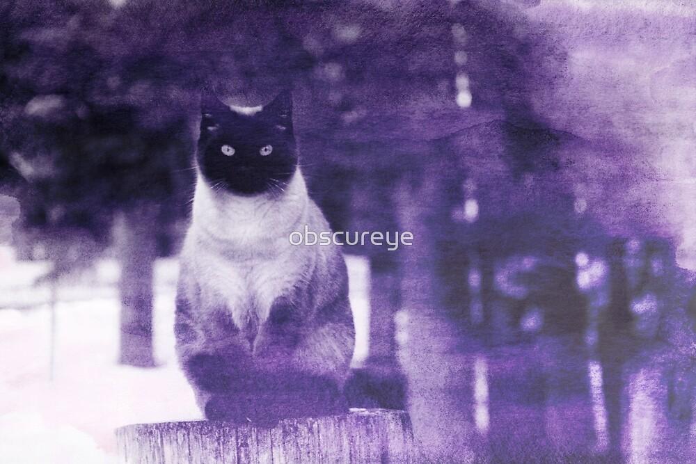 Winter Cat by obscureye