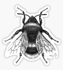 Black Bumblebee Illustration Sticker