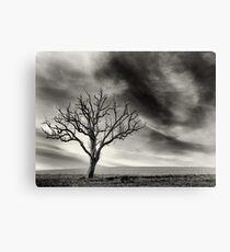 tree thunder sky clouds Canvas Print