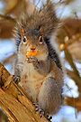 """Yummy on my Tummy, hows """"this"""" for a pose? by NatureGreeting Cards ©ccwri by NatureGreeting Cards ©ccwri"""