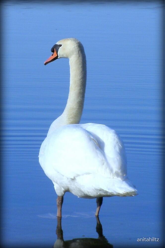 White Swan by anitahiltz