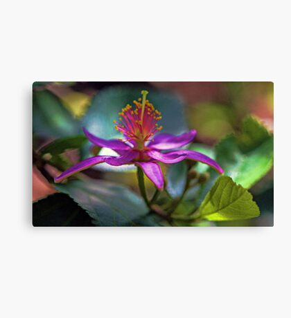 Grewia Oxidentalis (Lavender Starflower) Canvas Print
