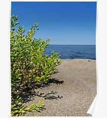 Lake Erie Beach Succulent Poster