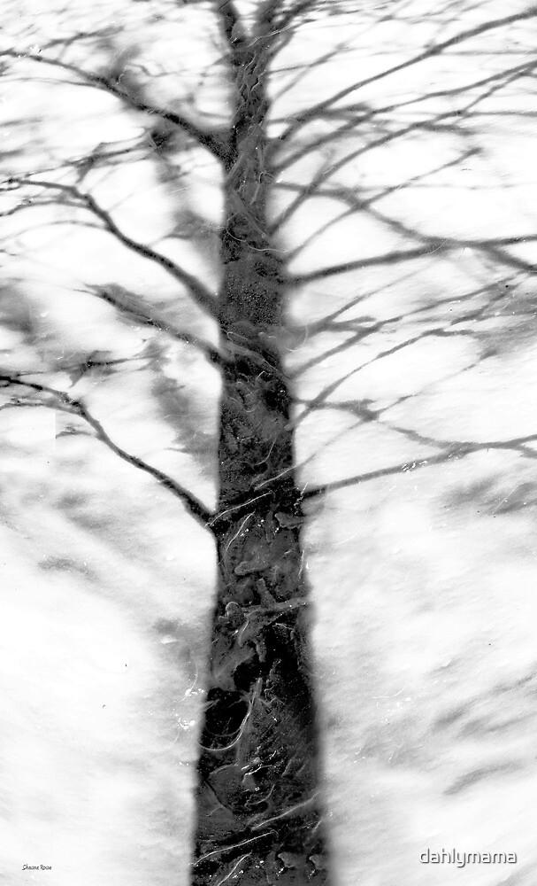 Shadow of Winter by Shawna Rowe