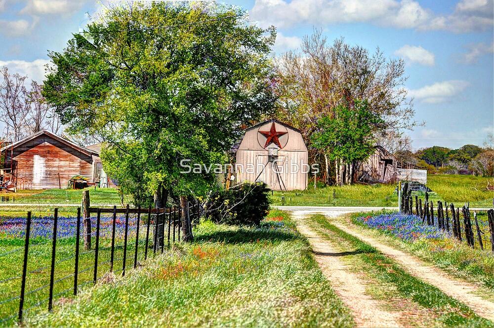 Springtime Along a Texas Rural Road by Savannah Gibbs