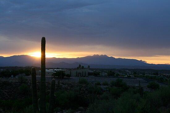 Saguaro Sunset by Hayley Bohn