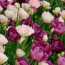 Peony Tulips by jules572