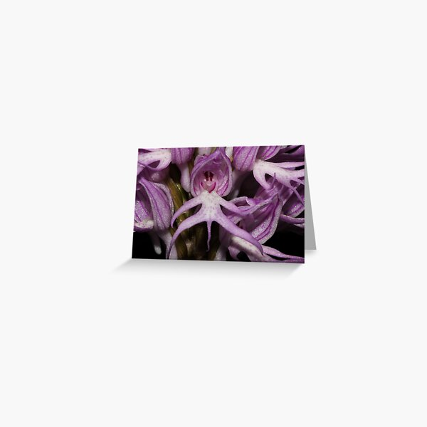 Orchis italica  Greeting Card