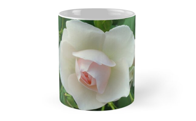 A Beautiful Rose by anitahiltz