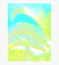 Pastel artistic palm tree branches print Photographic Print