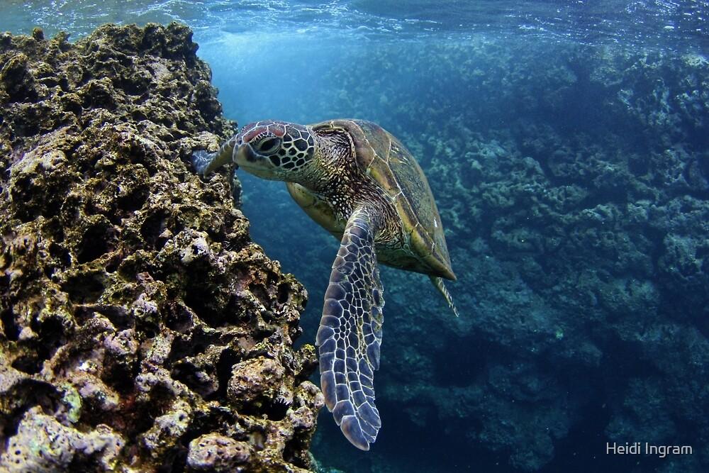 Green Sea Turtle by Heidi Ingram