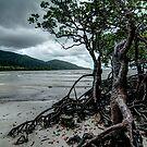 Cape Tribulation Mangroves by paulmcardle