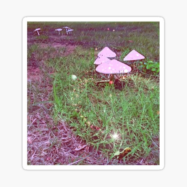Magical Mushrooms Sticker