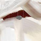 Winter's Cloak by Anivad - Davina Nicholas