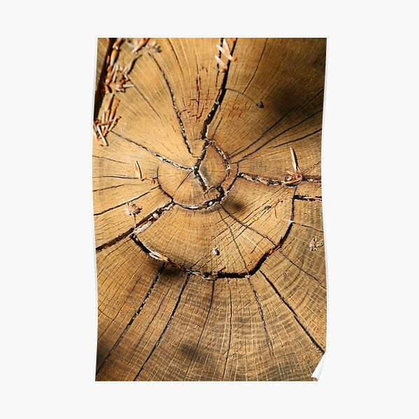Tree heart texture, design wood photography Poster