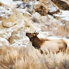 the young buck by james smith
