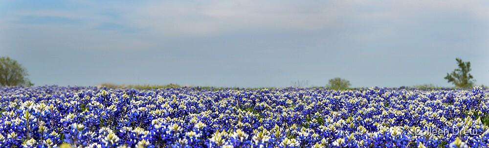 Bluebonnet Field by Colleen Drew