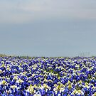 Bluebonnet Field by Colleen Drew