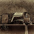 Sir Nigel Gresley emerging from the trees by SWEEPER