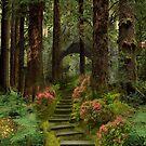 Pathway by Yvonne Pfeifer