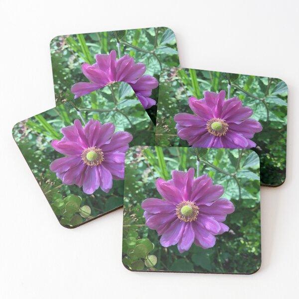 Land Anemone  Coasters (Set of 4)