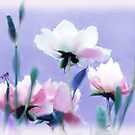 Pastel Peonies by Jessica Jenney