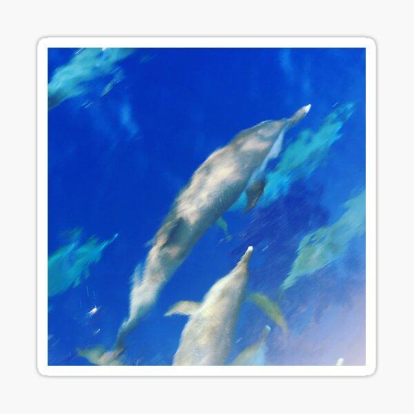 Caribbean Dolphin Pod Sticker
