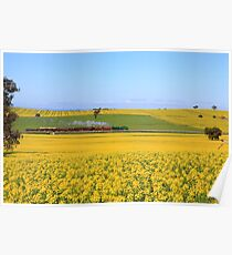 3642 passes Canola fields  - Old Junee Poster