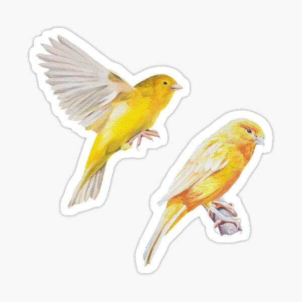 Canary Sticker set Sticker