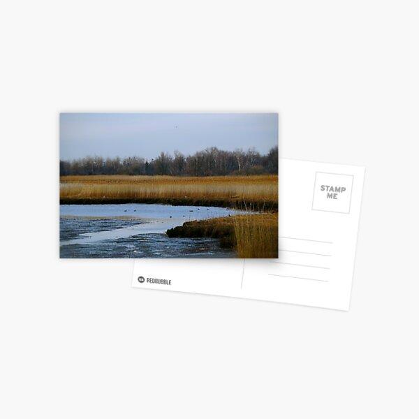 Reedland Postcard