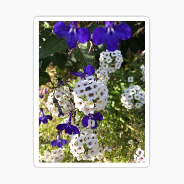 Blue & White Flower Decorations Sticker