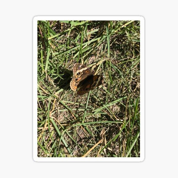 Butterfly in Grass Sticker