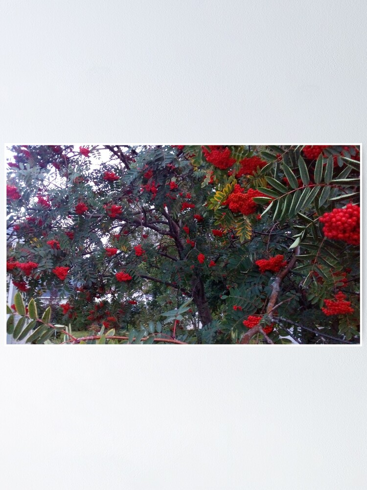 Alternate view of Flora and red fruits Poster