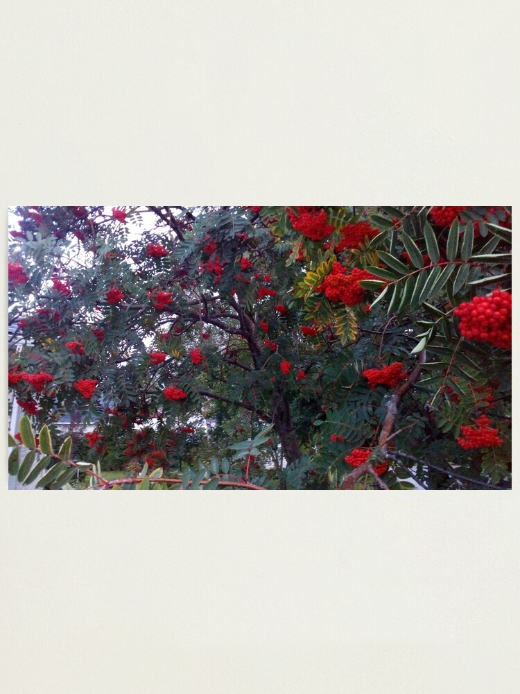 Alternate view of Flora and red fruits Photographic Print