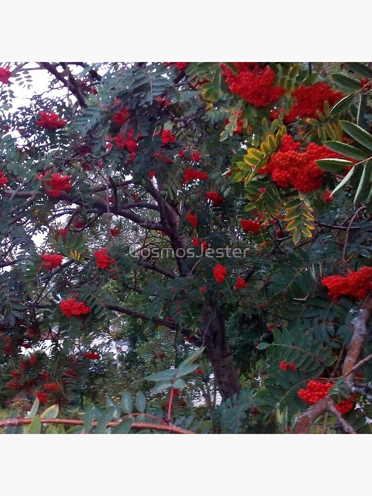 Flora and red fruits by CosmosJester