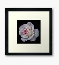 A Rose Framed Print