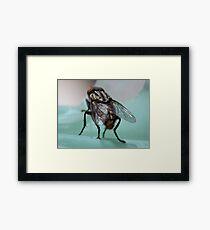 ©NS Wings For Flying IA Framed Print