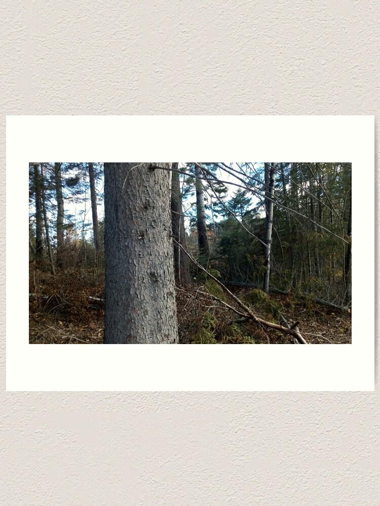 Alternate view of Canadian woodland 1 Art Print
