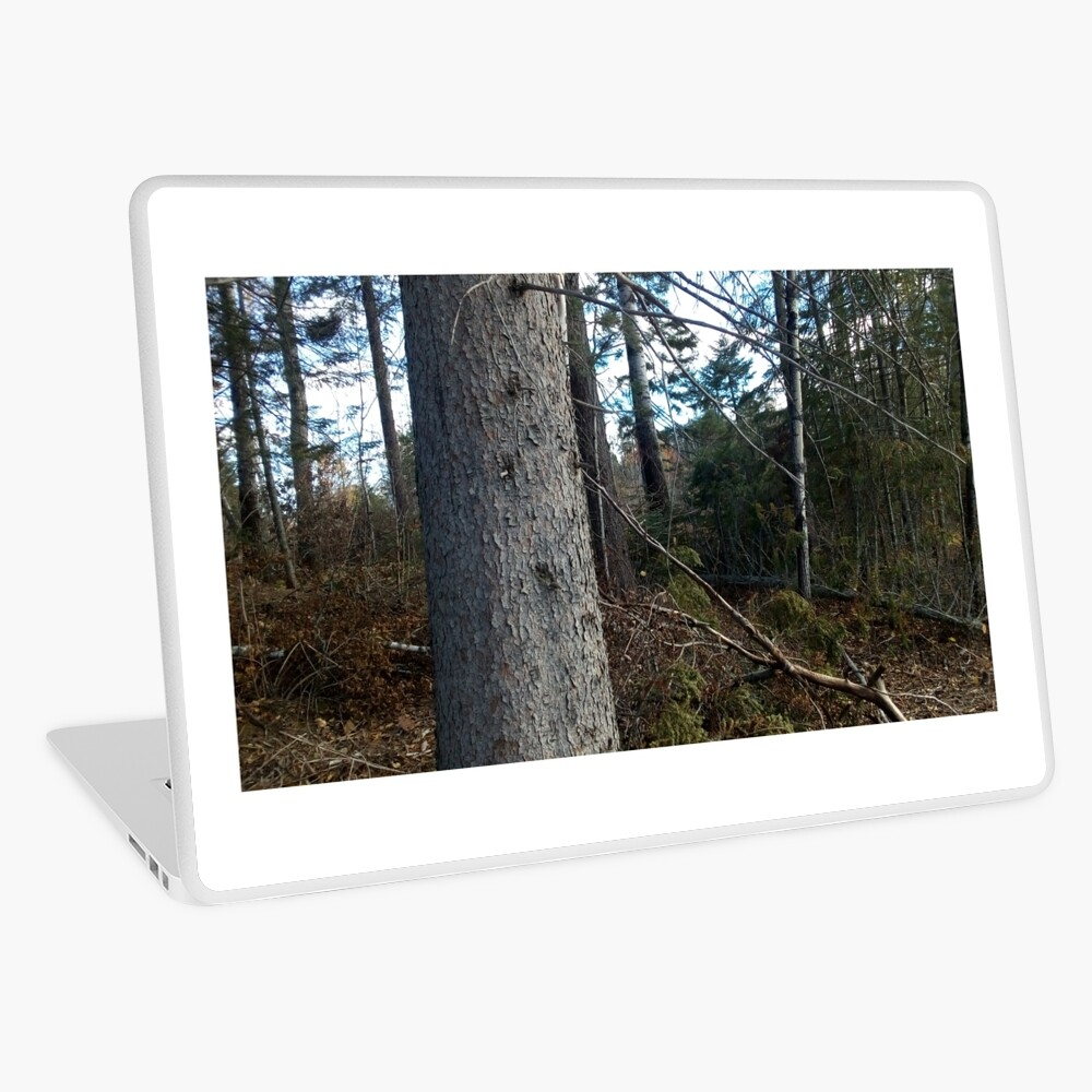 Canadian woodland 1 Laptop Skin