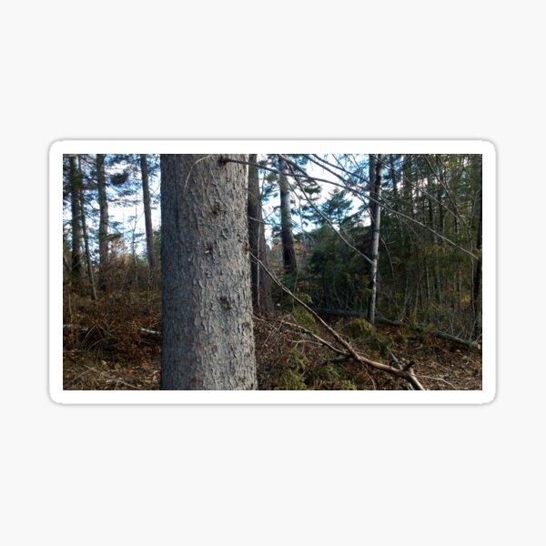 Canadian woodland 1 Sticker