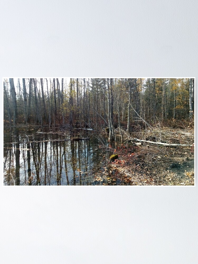 Alternate view of canadian swamp land 1 Poster
