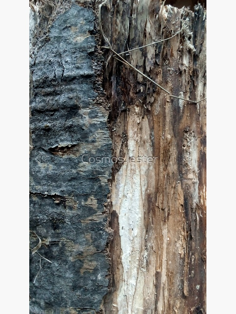 Log up close 1 by CosmosJester