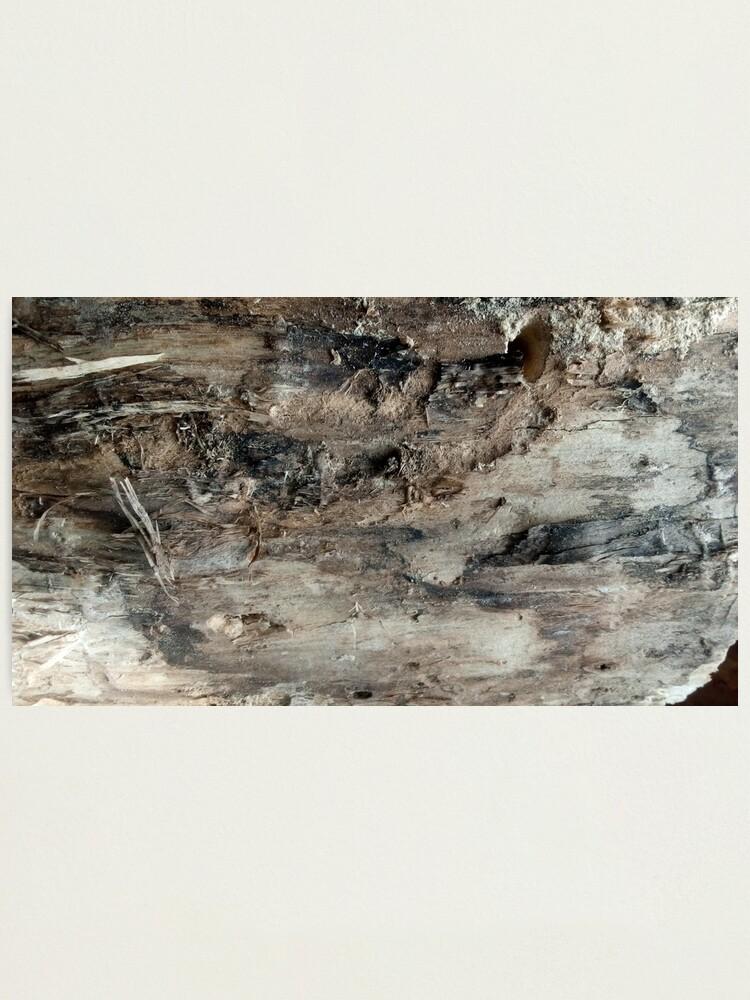 Alternate view of log upclose 3 Photographic Print