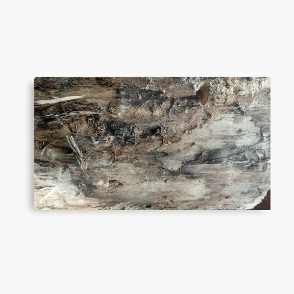 log upclose 3 Metal Print