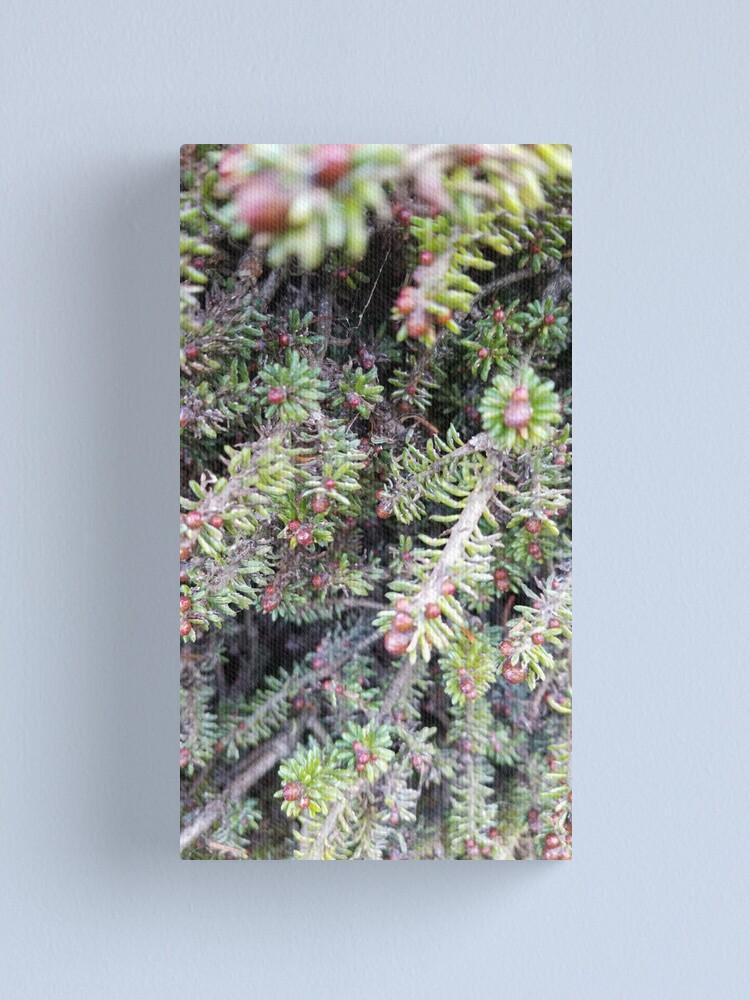 Alternate view of evergreen ever so close Canvas Print
