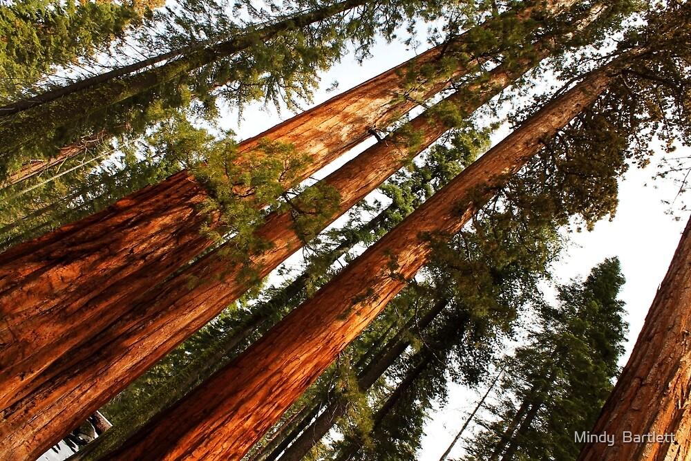 Yosemite 3 by Mindy Bartlett