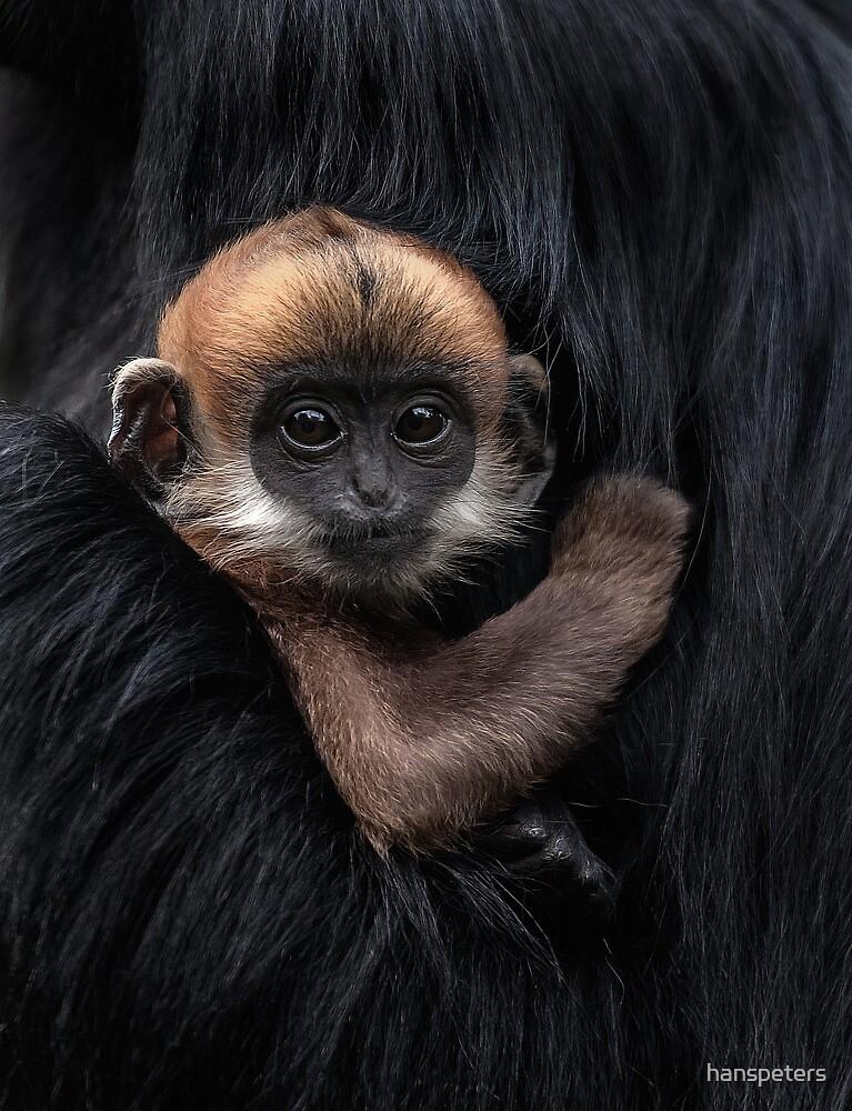 Francois' leaf monkey by hanspeters