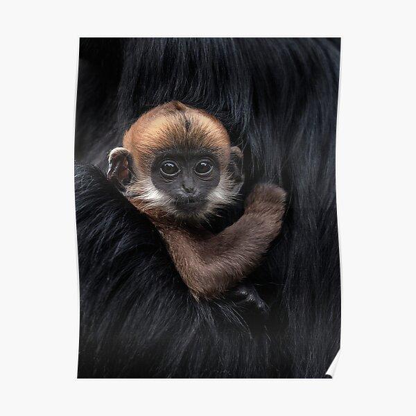 Francois' leaf monkey Poster