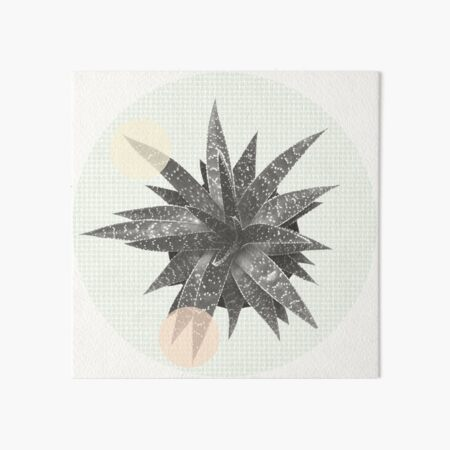 Sukkulente Haworthia Fasciata mit Pastell Punkten  Galeriedruck